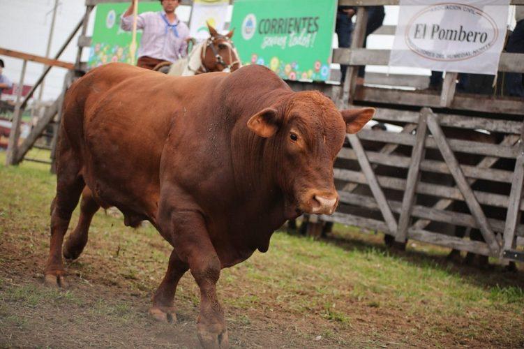 Apoyo a pequeños productores en Ituzaingó