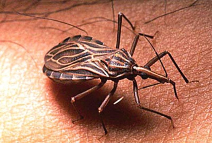 Certificación Libre de Transmisión Vectorial de Chagas